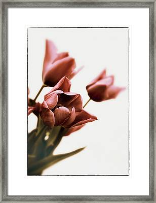 Framed Print featuring the photograph Still Life Tulips by Jessica Jenney