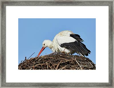 Framed Print featuring the photograph Stork On A Nest by Nick Biemans