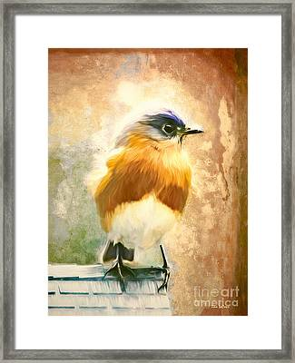 Strapping Bluebird Framed Print by Tina LeCour