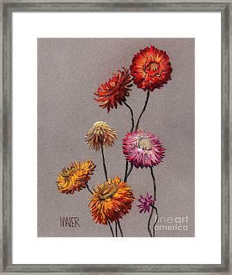 Straw Flowers Framed Print