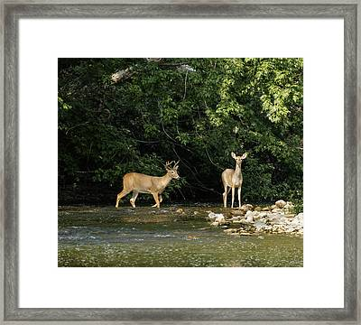 Stream Crossing Framed Print
