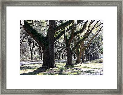 Strong Trees In The South Framed Print