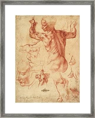 Studies For The Libyan Sibyl Framed Print by Michelangelo Buonarroti