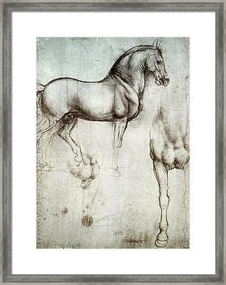 Study Of Horses Framed Print