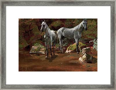 Study Of Wild Horses Framed Print