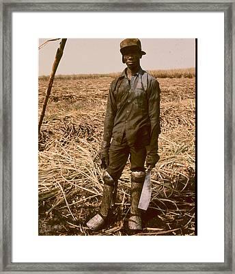 Sugar Cane Cutter Framed Print
