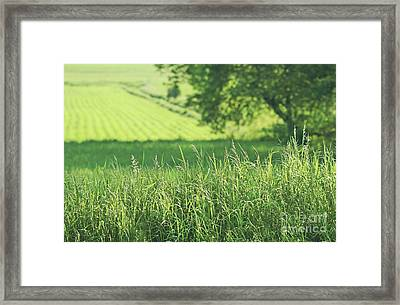 Summer Fields Of Green Framed Print by Sandra Cunningham