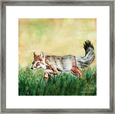 Summer Fox Framed Print by Antony Galbraith