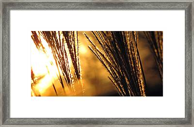 Sun Grass Wind Framed Print