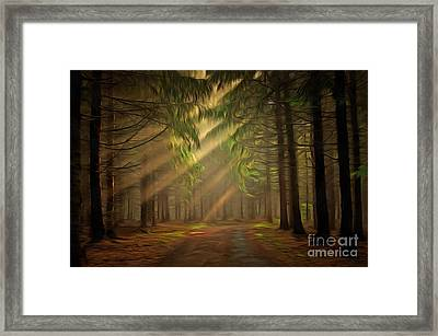 Sun Rays In The Forest Framed Print by Michal Boubin