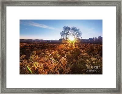 Sun Framed Print by Svetlana Sewell