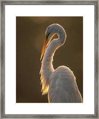 Framed Print featuring the photograph Sunbathing by Francisco Gomez