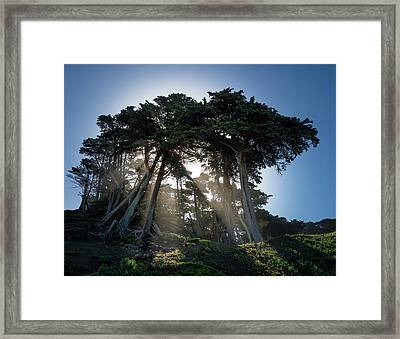 Sunbeams From Large Pine Or Fir Trees On Coast Of San Francisco  Framed Print by Steven Heap