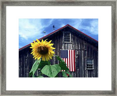 Sunflower By Barn Framed Print