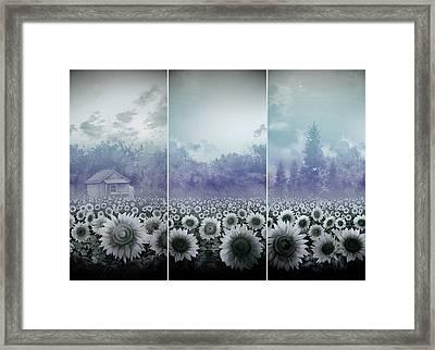 Sunflowers Triptych Framed Print