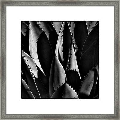 Sunlit Cactus Framed Print by David Patterson