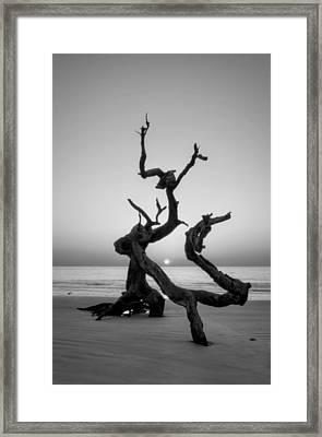 Sunrise On Driftwood In Black And White Framed Print