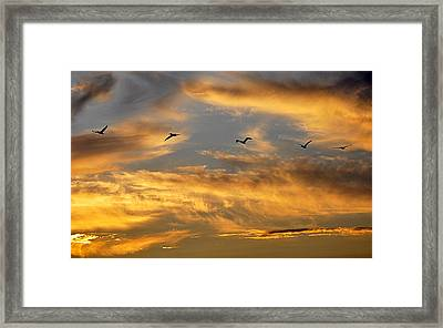 Sunset Flight Framed Print by AJ Schibig