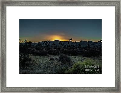sunset Joshua Tree National Park Framed Print by Timothy Kleszczewski