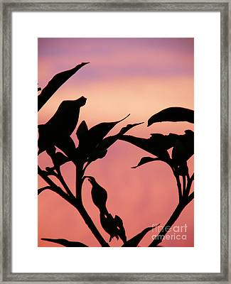 Sunset Silhouette Framed Print by Rose  Hill