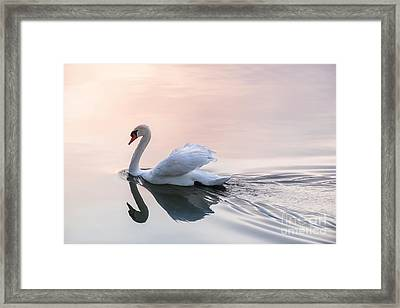 Sunset Swan Framed Print by Elena Elisseeva