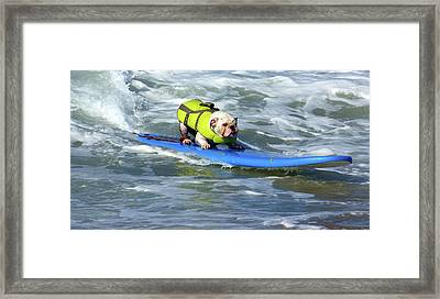 Surfing Dog Framed Print by Thanh Thuy Nguyen