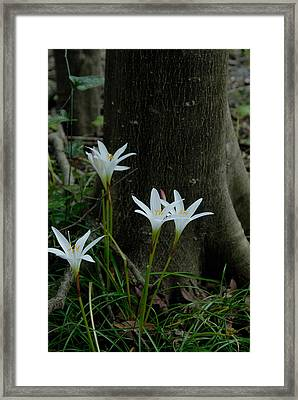 Swamp Lilies Framed Print
