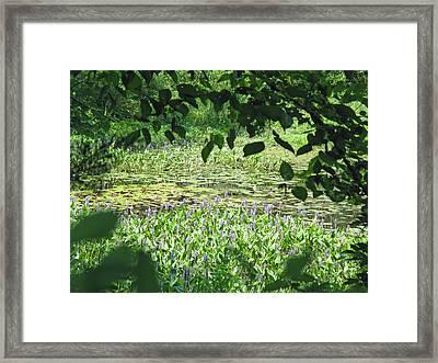 Swampy Framed Print by Barbara McDevitt