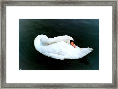 Swan At Rest  Framed Print by Richard Mansfield