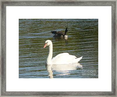 Framed Print featuring the photograph Swan by Elizabeth Fontaine-Barr