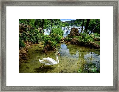 Swan In The Waterfalls Of Skradinski Buk At Krka National Park In Croatia Framed Print