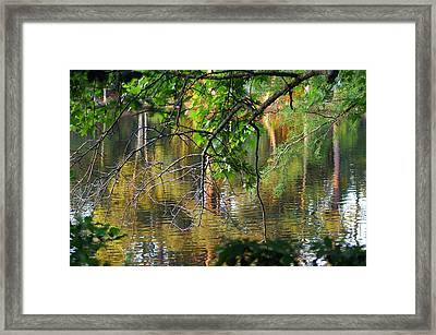 Swan Lake Framed Print by Don Prioleau