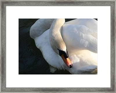 Swan Lake Story Framed Print by Valia Bradshaw
