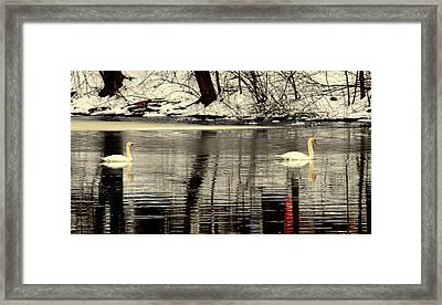 Swan Song Framed Print by Aron Chervin