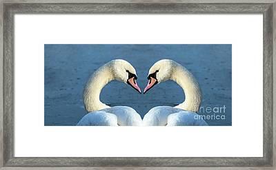 Swans Portrait Framed Print
