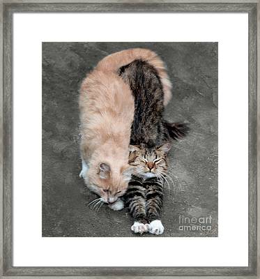 Sweet Couple Framed Print by Sergey Lukashin