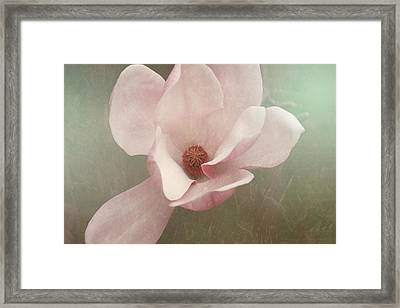 Sweetbay Magnolia Bloom Framed Print by Toni Hopper