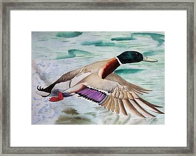 Takin Off Framed Print