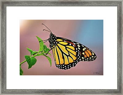 Taking A Break Framed Print by Christopher Holmes