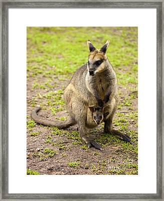 Taking A Peek Framed Print by Mike Dawson