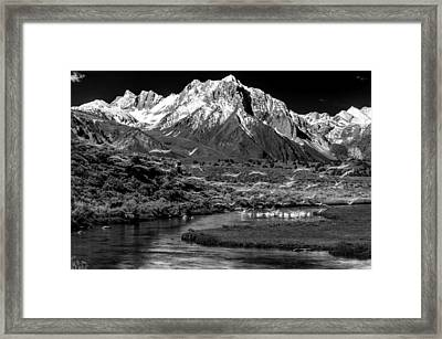 Taking Flight Framed Print by Cat Connor