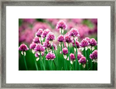 Tall Tale Framed Print by Monica Lopez