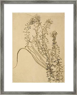 Tassel Hyancinth Framed Print