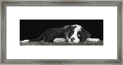 Tell Me More About Sheep Framed Print
