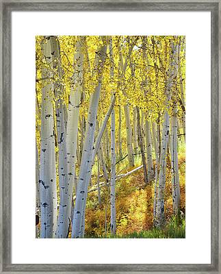 Framed Print featuring the photograph Telluride Aspens by Ray Mathis
