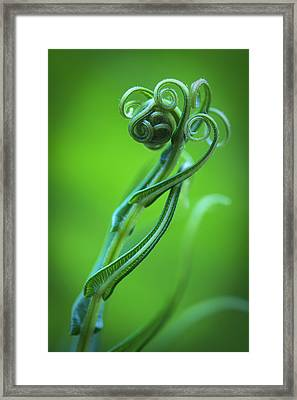 Tendrils Framed Print by Zoe Ferrie