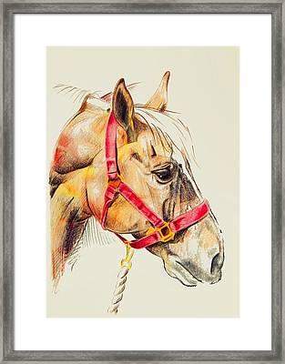 Tequila Framed Print by JAMART Photography