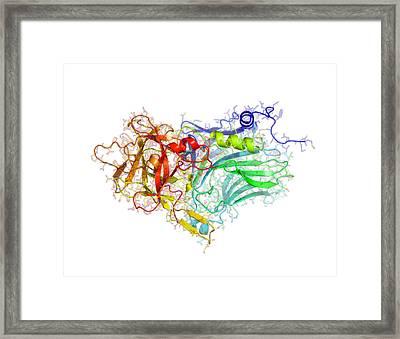 Tetanus Toxin C-fragment Structure Framed Print by Laguna Design
