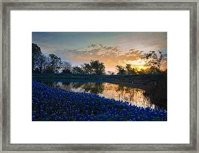 Texas Bluebonnets Framed Print by Mark Alder