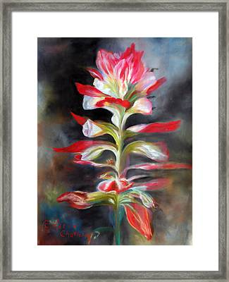 Texas Indian Paintbrush Framed Print